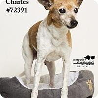 Adopt A Pet :: Charles - Baton Rouge, LA