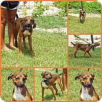 Adopt A Pet :: RAMBO - Davenport, FL