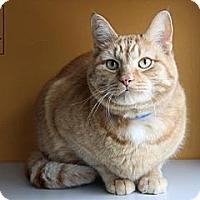 Adopt A Pet :: Pumpkin - Lancaster, MA