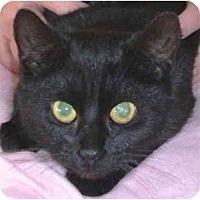 Adopt A Pet :: Cole Haan - Colmar, PA