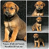 Adopt A Pet :: Tanya - Evansville, IN