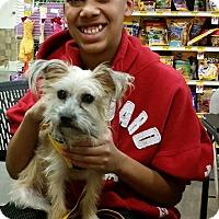 Adopt A Pet :: Christian - non shed! - Phoenix, AZ