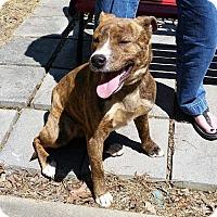 Adopt A Pet :: Keno - Bardonia, NY