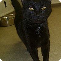 Adopt A Pet :: Black Jack - Hamburg, NY