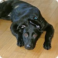 Adopt A Pet :: Ricky - Surrey, BC