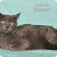 Adopt A Pet :: Pryncess - West Des Moines, IA