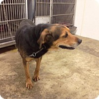 Adopt A Pet :: BUCK - Upper Sandusky, OH