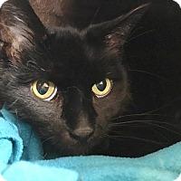 Adopt A Pet :: March - Salisbury, MA