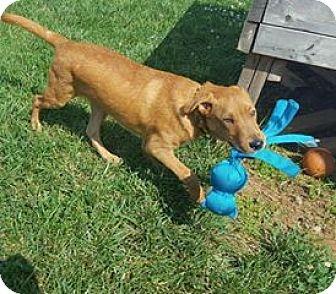 Petsmart Dog Adoption Lexington Ky
