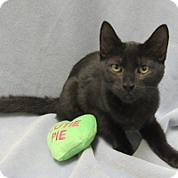 Adopt A Pet :: Morgana - Lexington, NC
