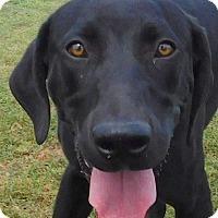 Adopt A Pet :: Baron - MINNEAPOLIS, KS