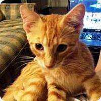 Adopt A Pet :: Vin Diesel - York, PA