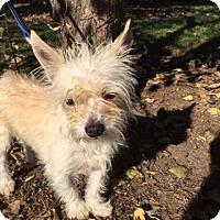 Adopt A Pet :: DAYN - Elk Grove, CA