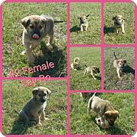 Adopt A Pet :: Say-bo meet me 12/16 - Manchester, CT