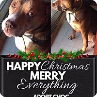 Adopt A Pet :: *Choc - Elgin, IL