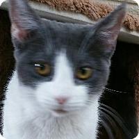 Adopt A Pet :: Cerise - Chula Vista, CA