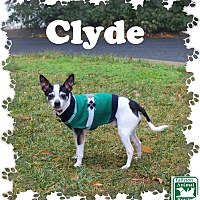 Adopt A Pet :: Clyde - Fallston, MD