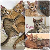 Adopt A Pet :: Tiggy & Tater - Oakland Park, FL