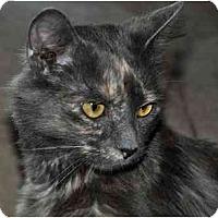 Adopt A Pet :: Daphne - Alexandria, VA