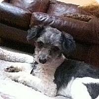Adopt A Pet :: Matt - Richmond, VA