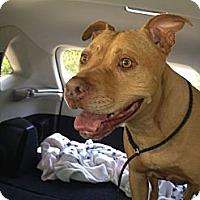 Adopt A Pet :: BUGSY - Valley Village, CA