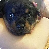 Adopt A Pet :: Kyra - Sinking Spring, PA