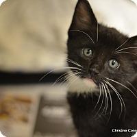 Adopt A Pet :: Johnny - Island Park, NY