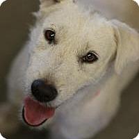 Adopt A Pet :: Popcorn - Phoenix, AZ