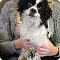 Adopt A Pet :: Gentry - Marietta, GA
