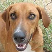 Labrador Retriever/German Shepherd Dog Mix Dog for adoption in Grand Saline, Texas - Bonnie