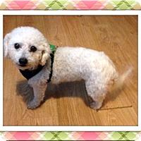 Adopt A Pet :: Adopted!!Sissy - OH - Tulsa, OK