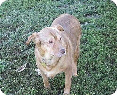 Spaniel (Unknown Type) Mix Dog for adoption in Richmond, Virginia - Hazel