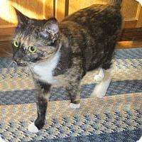 Adopt A Pet :: Maisey - Witter, AR