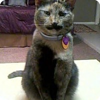 Adopt A Pet :: Jolie - Houston, TX