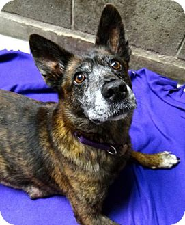 Cattle Dog Mix Dog for adoption in Seal Beach, California - Harper