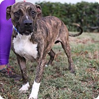 Adopt A Pet :: Yates - San Diego, CA