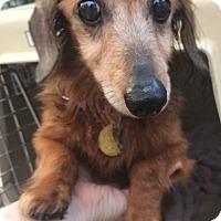 Adopt A Pet :: Bella - Oak Ridge, NJ