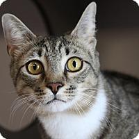 Adopt A Pet :: McArthur - Sarasota, FL