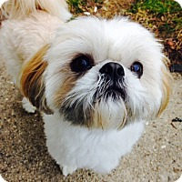 Adopt A Pet :: Luigi - Adoption Pending - West Allis, WI