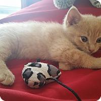 Adopt A Pet :: Sal - Monroe, NC