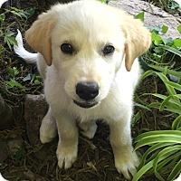Adopt A Pet :: Nala *Pending Adoption - Tulsa, OK