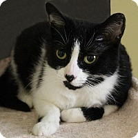 Adopt A Pet :: Cinderella - Rochester, NY