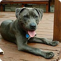 Adopt A Pet :: Emmett - Rochester Hills, MI