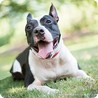 Adopt A Pet :: Stella - East Hartford, CT