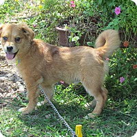 Adopt A Pet :: REECE - Bedminster, NJ