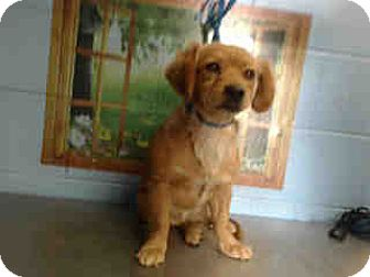 Terrier (Unknown Type, Medium) Mix Puppy for adoption in San Bernardino, California - URGENT on 10/5 SAN BERNARDINO
