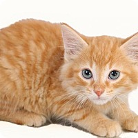 Adopt A Pet :: Tiny - Adopted - Madison, TN