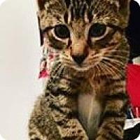 Adopt A Pet :: Marco - Gainesville, FL
