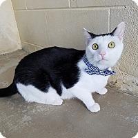 Adopt A Pet :: Elton - Umatilla, FL