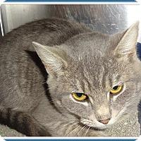 Adopt A Pet :: TERRY - Marietta, GA